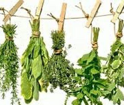 le erbe aromatiche per la nostra salute