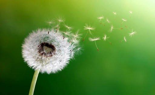 curare allergia da polline